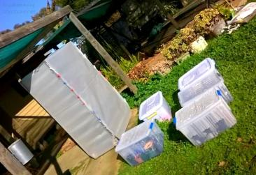 Kept closed up every night and some days, opened up to air out on sunny days. The tubs were never sealed air tight, lids just loosely sat on top.