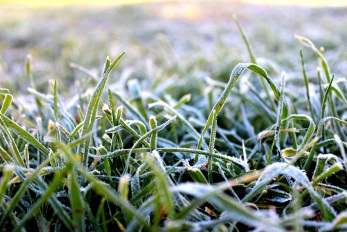 Morning frost on the first day of Spring.